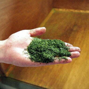 Thé vert - les thés OCHAYA